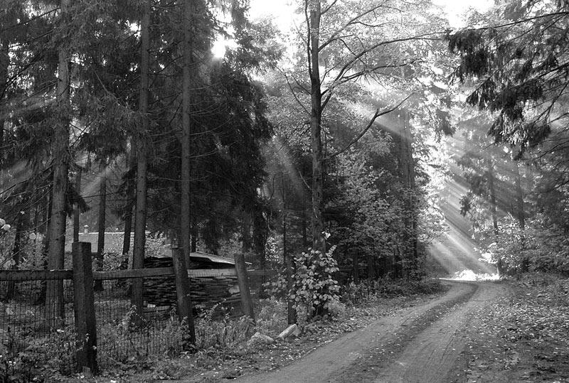 "фото ""свет"" метки: пейзаж, лес"