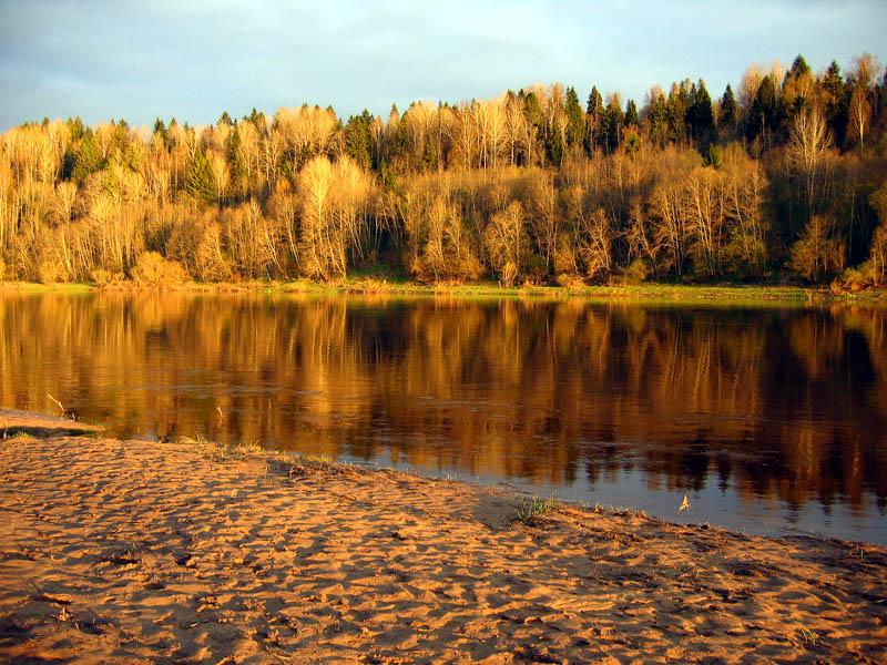"""фото """"Оранжевый лес."""" метки: пейзаж, вода"""