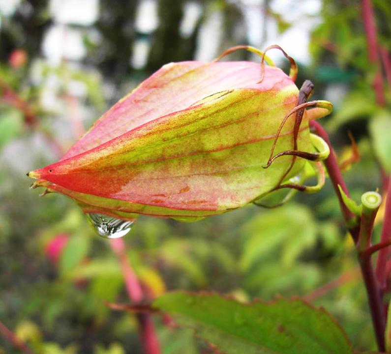 """фото """"После дождя"""" метки: макро и крупный план,"""