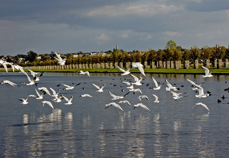 "photo ""Flights of Gulls"" tags: landscape,"