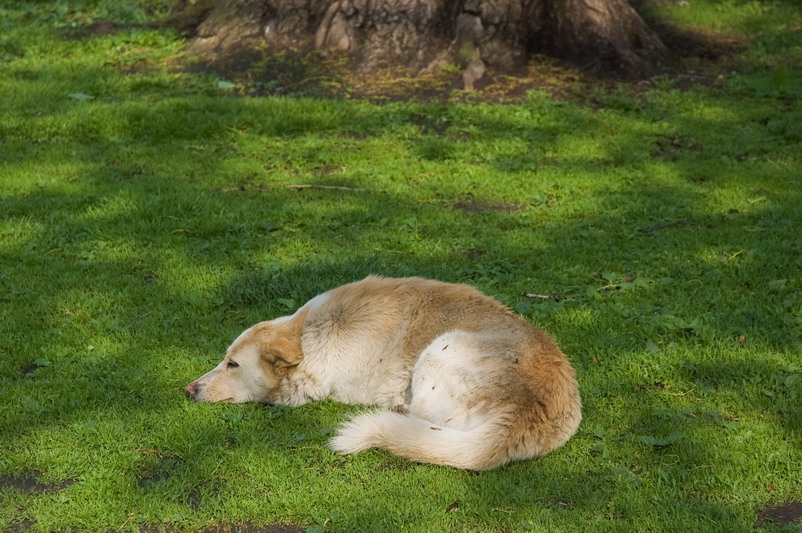 """фото """"После вкусного обеда..."""" метки: природа, домашние животные"""