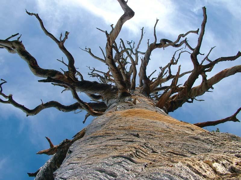 """фото """"Dead tree"""" метки: природа, пейзаж, цветы"""