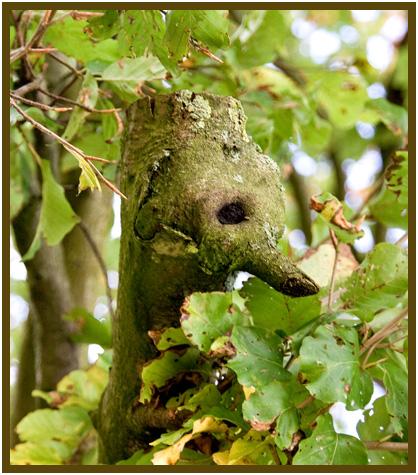 "photo ""like a bird"" tags: landscape, autumn, forest"