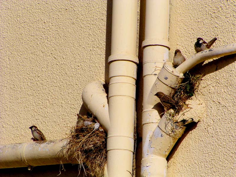"""фото """"Adapting Birds"""" метки: фрагмент, природа, дикие животные"""