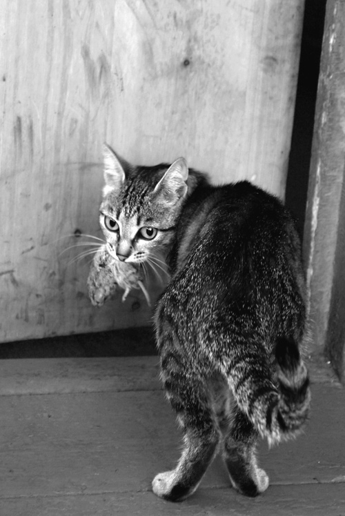"""фото """"сюрприз для хозяйки"""" метки: природа, домашние животные"""