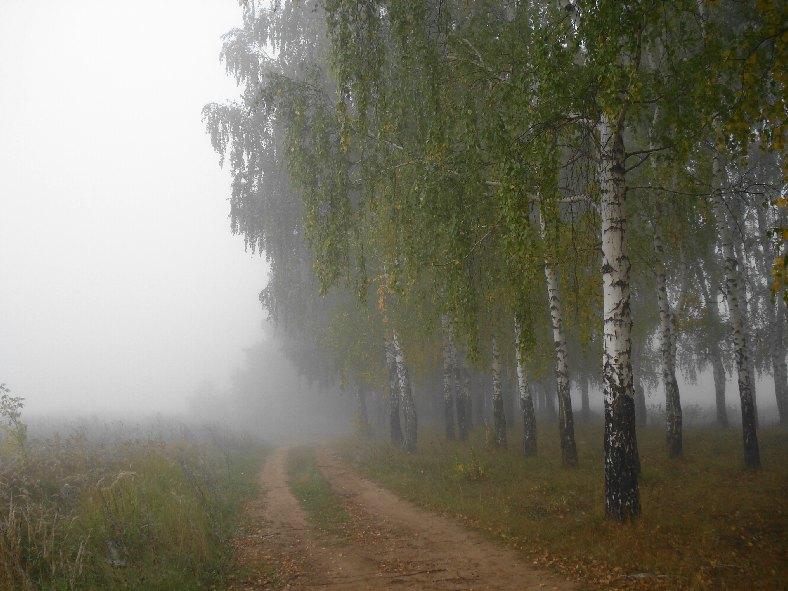 """фото """"* * * * *"""" метки: пейзаж, лес, осень"""