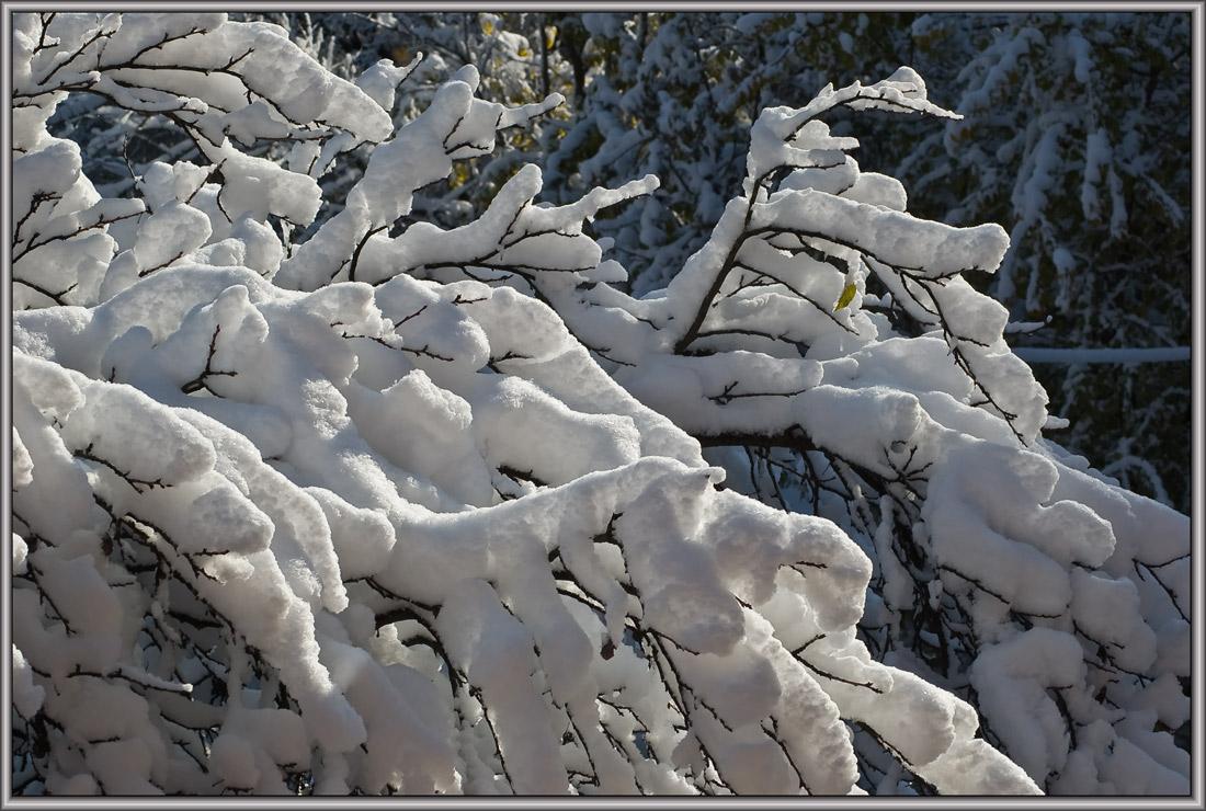 """фото """"ранний белоцвет"""" метки: природа,"""