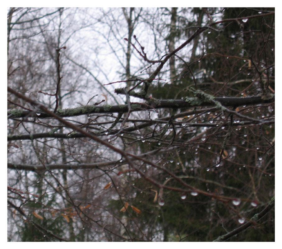 """фото """"Дремучесть"""" метки: пейзаж, зима, лес"""