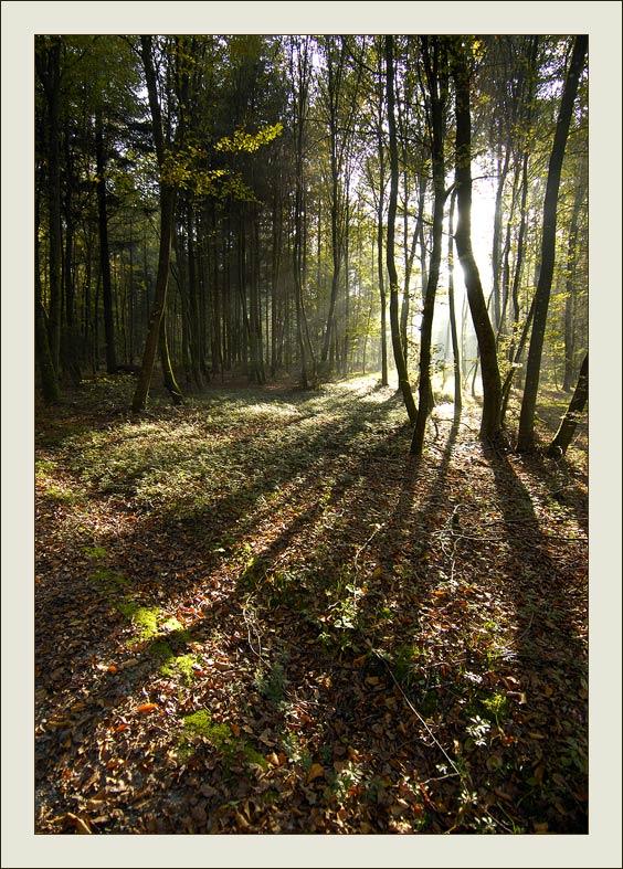 """фото """"Туда..."""" метки: пейзаж, лес, осень"""