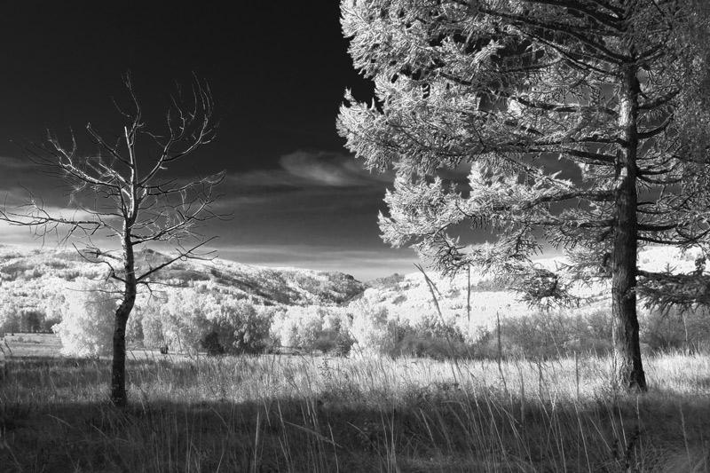 """фото """"Каждому своё..."""" метки: пейзаж, природа, осень"""