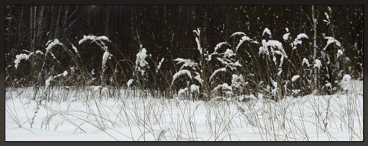 "фото ""Снежный хлеб"" метки: ,"