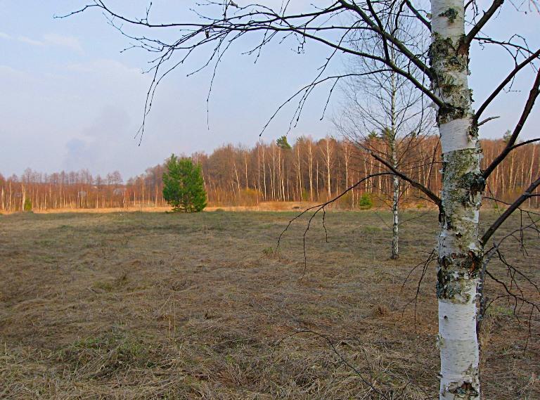 "фото ""На поле..."" метки: пейзаж,"