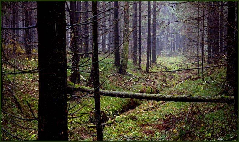 "фото ""Там, где начинаются овраги."" метки: пейзаж, лес, осень"