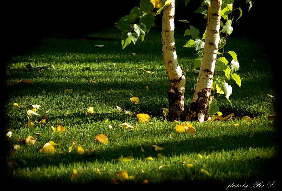 """фото """"Время, когда листья падают с берез."""" метки: пейзаж, природа, осень"""
