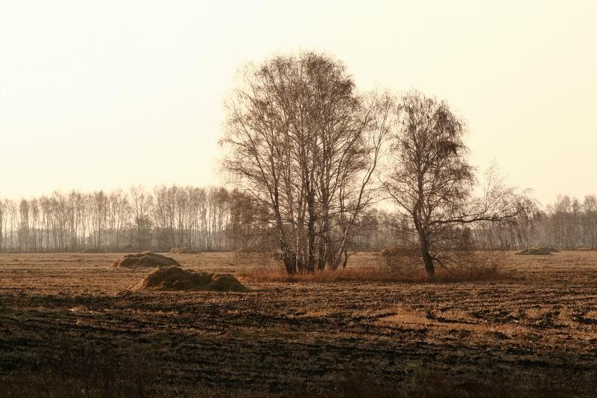 "фото ""осенние поля"" метки: пейзаж, лес"