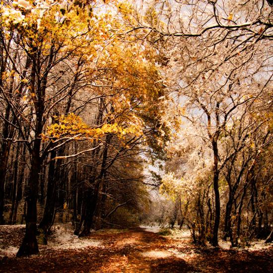 "фото ""Бело-золотая осень"" метки: пейзаж, осень"