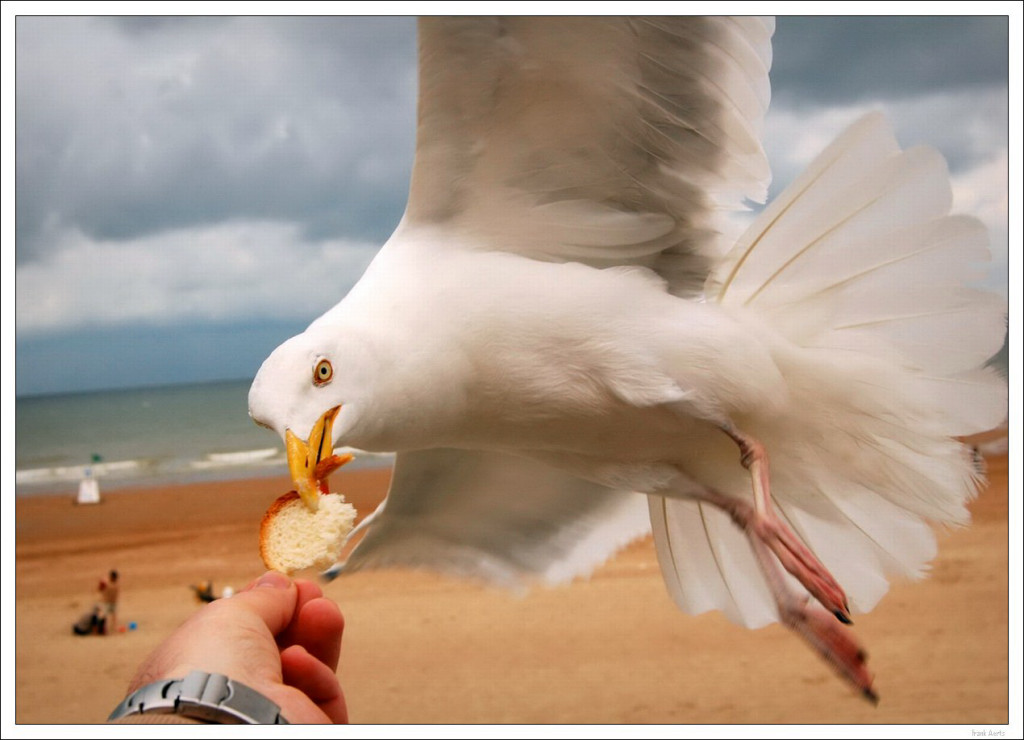 "photo ""Hungry bird 2"" tags: nature, wild animals"