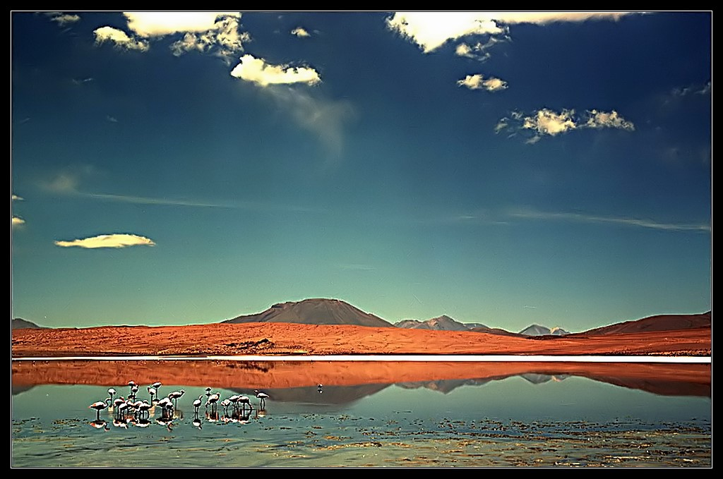 "photo ""Bolivian flamingos"" tags: landscape, nature, mountains, wild animals"