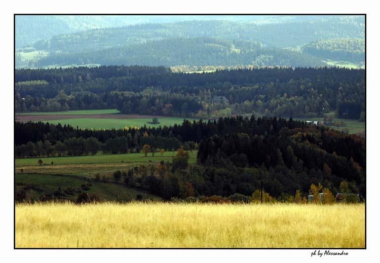 """photo """"autumn"""" tags: landscape, forest"""