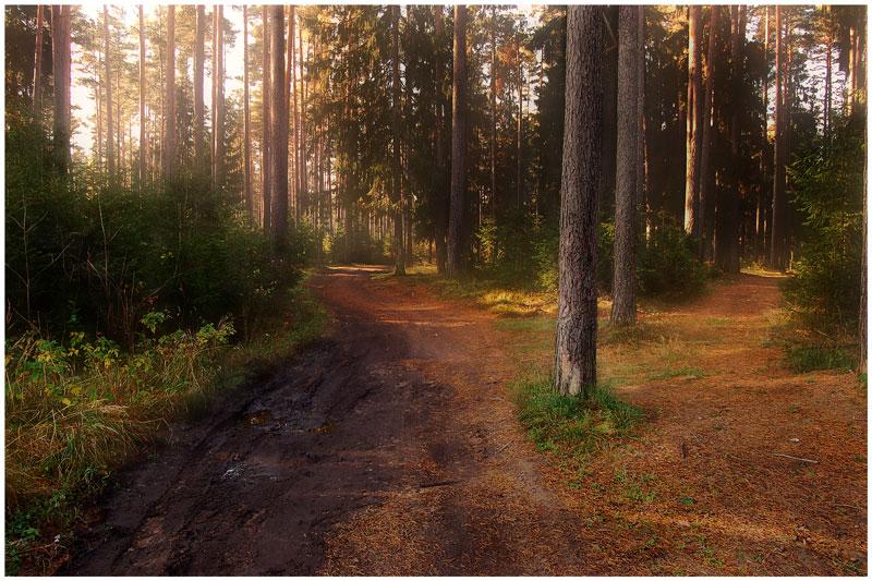 """фото """"Утро в лесу"""" метки: пейзаж, лес, осень"""