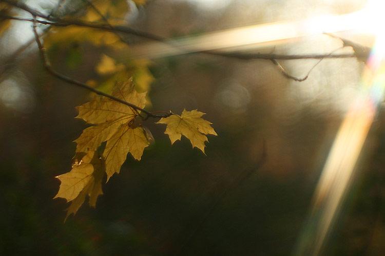 """фото """"Последний луч"""" метки: природа, пейзаж, осень, цветы"""
