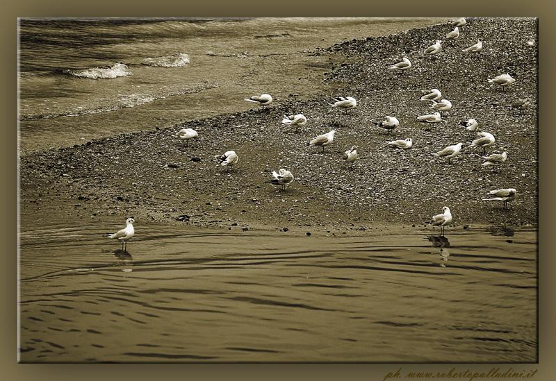 "фото ""on the river"" метки: ,"