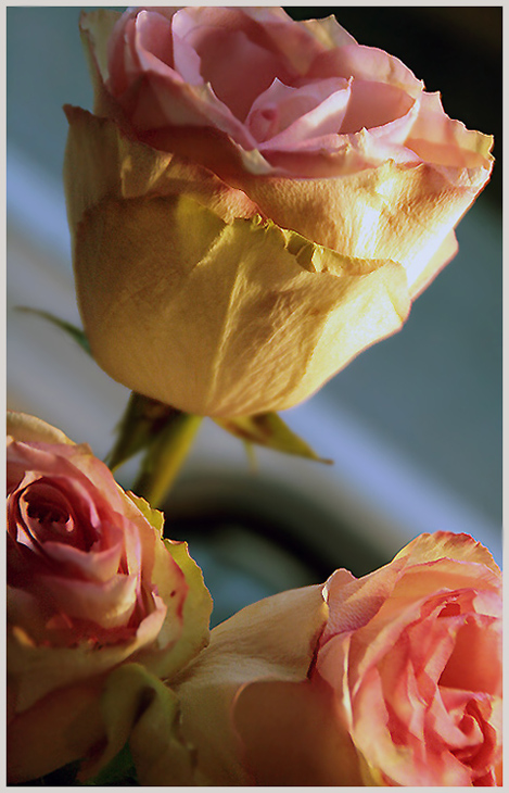 "photo ""About the completeness of feelings"" tags: nature, still life, flowers"
