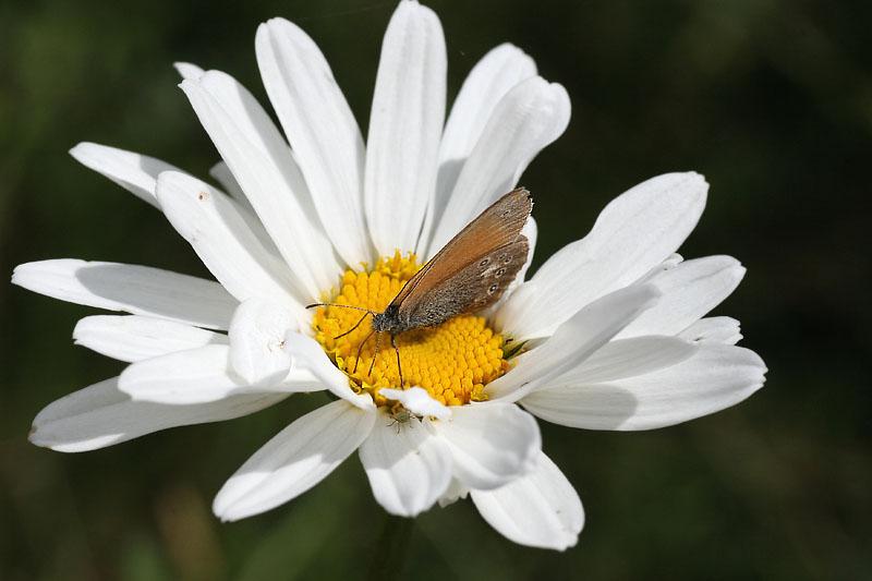 """фото """"Игра в прятки"""" метки: природа, макро и крупный план, насекомое"""