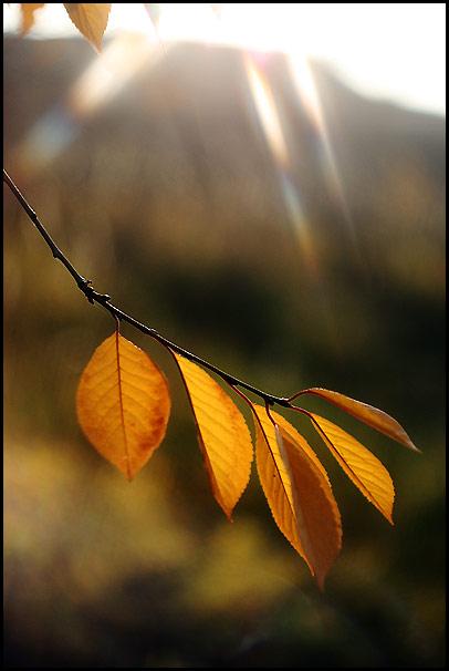 """фото """"Нежное прикосновение"""" метки: природа, пейзаж, осень, цветы"""