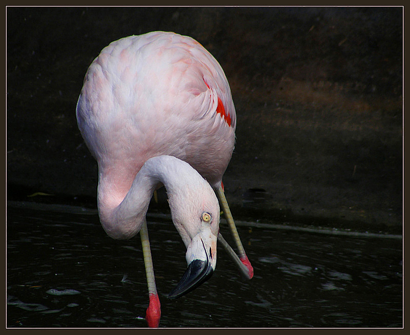 "photo ""Pink !"" tags: nature, travel, Europe, wild animals"