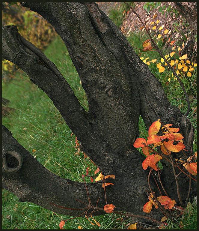 """photo """"The usual autumn"""" tags: landscape, autumn"""