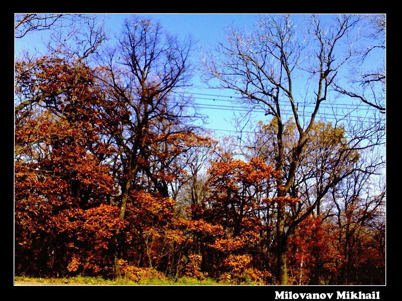 """фото """"осень..."""" метки: пейзаж, лес"""