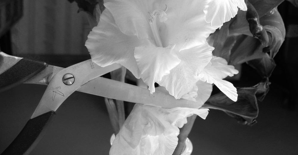 "фото ""жизнь без цветов"" метки: натюрморт, черно-белые,"