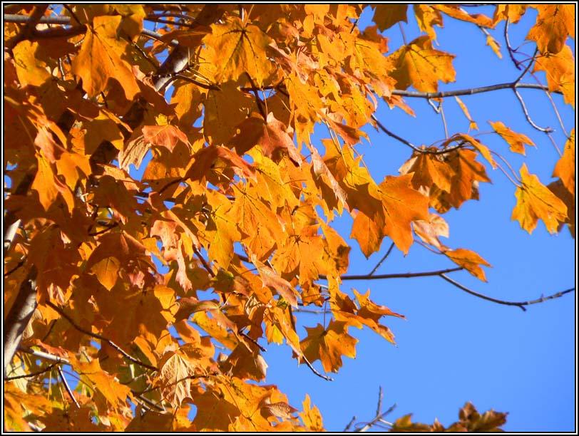 "photo ""Этой осенью / This fall"" tags: landscape, autumn"