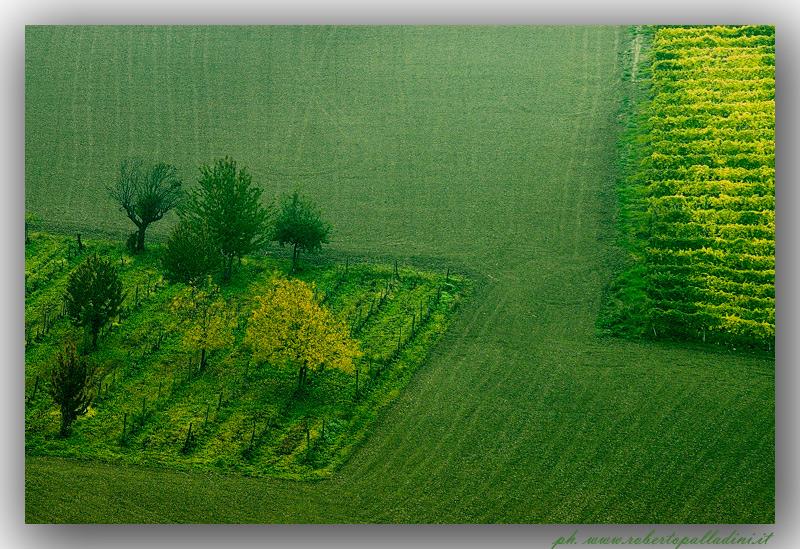 """фото """"Green Monferrato"""" метки: пейзаж,"""
