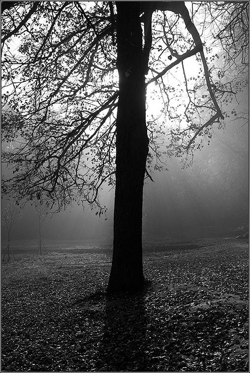 "фото ""Сияние или Осенний марафон -5"" метки: пейзаж, осень"