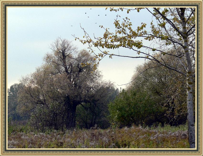 "photo ""Autumn for the Nightingale - robber."" tags: landscape, autumn"