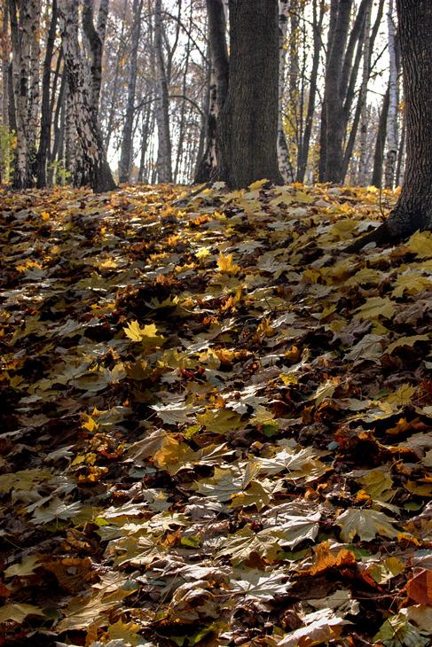 "photo ""On a wood..."" tags: landscape, autumn"