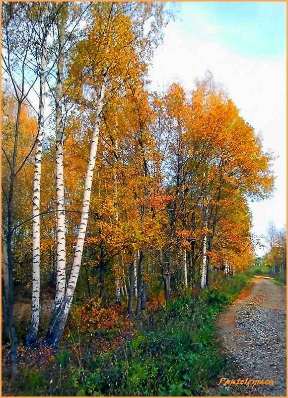 """фото """"красота осени"""" метки: пейзаж, осень"""