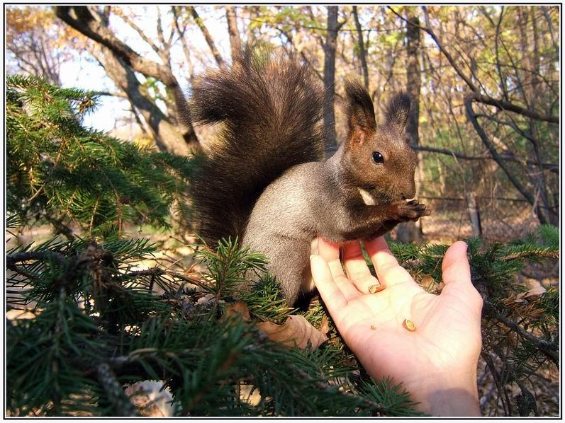 "фото ""А орешки не простые"" метки: ,"