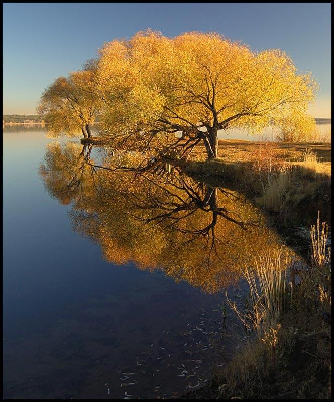 """photo """"Gold sad"""" tags: landscape, autumn, forest"""