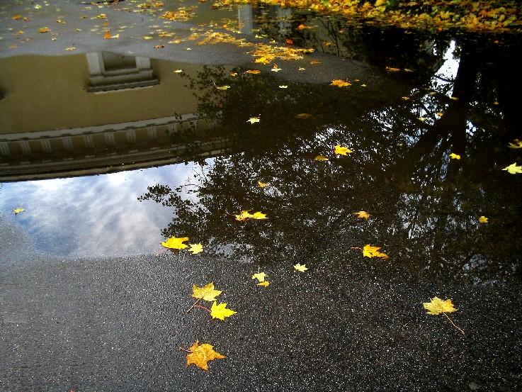 """фото """"Листья клена на мокром асфальте"""" метки: пейзаж, осень"""