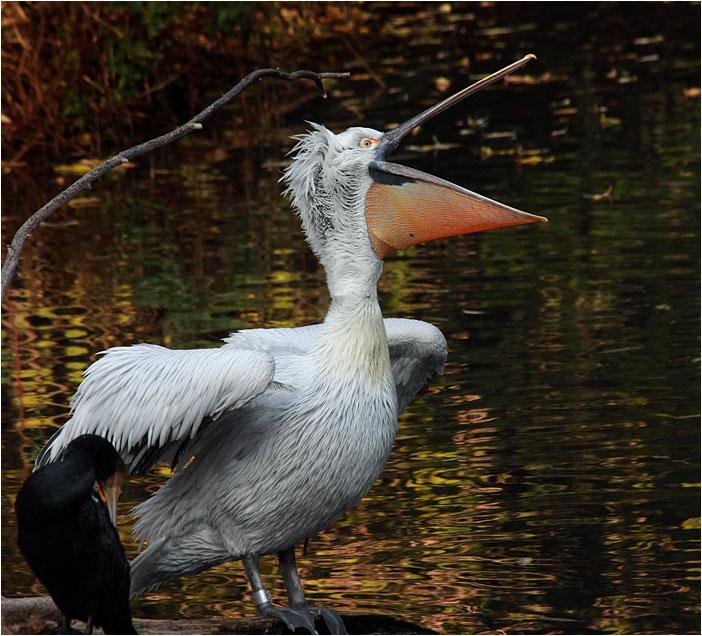"photo ""Aria"" tags: nature, wild animals"