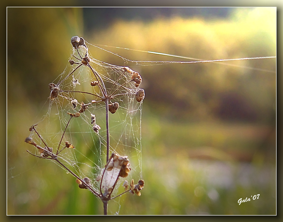 "photo ""The autumn net"" tags: macro and close-up, nature, flowers"