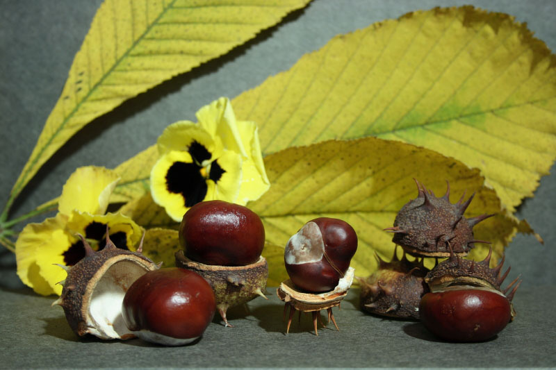 "photo ""The Chestnuts"" tags: still life,"