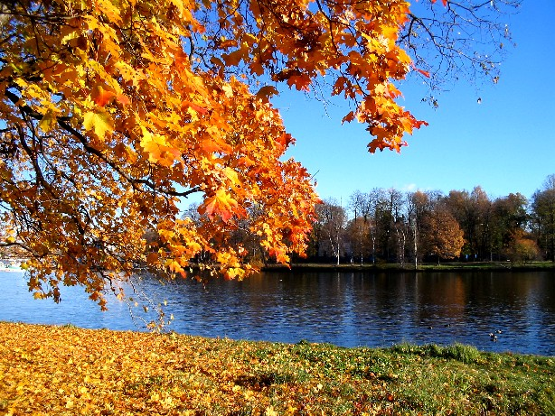 "photo ""gold and blue autumn"" tags: landscape, autumn"