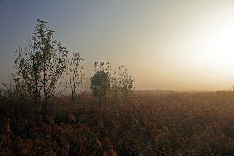 "photo ""Fogy morning"" tags: landscape, autumn"