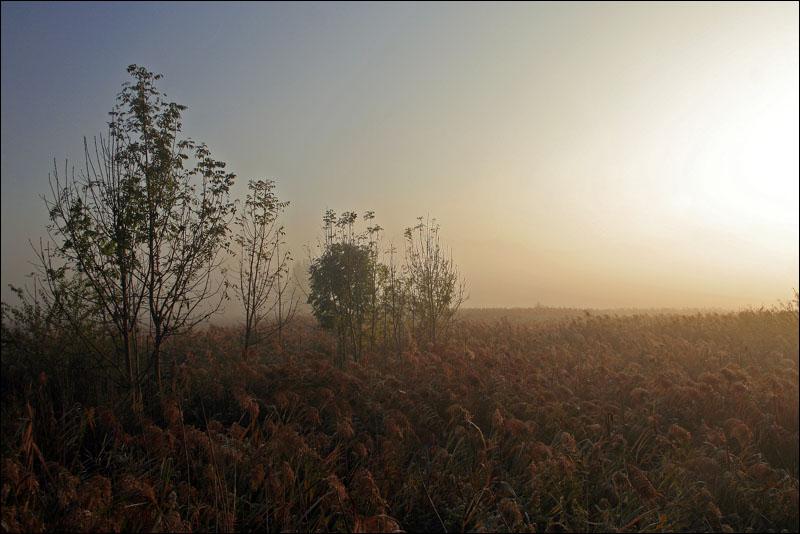 """фото """"Fogy morning"""" метки: пейзаж, осень"""