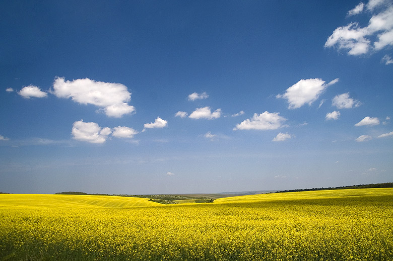 "photo ""Yellow & blue"" tags: landscape, summer"