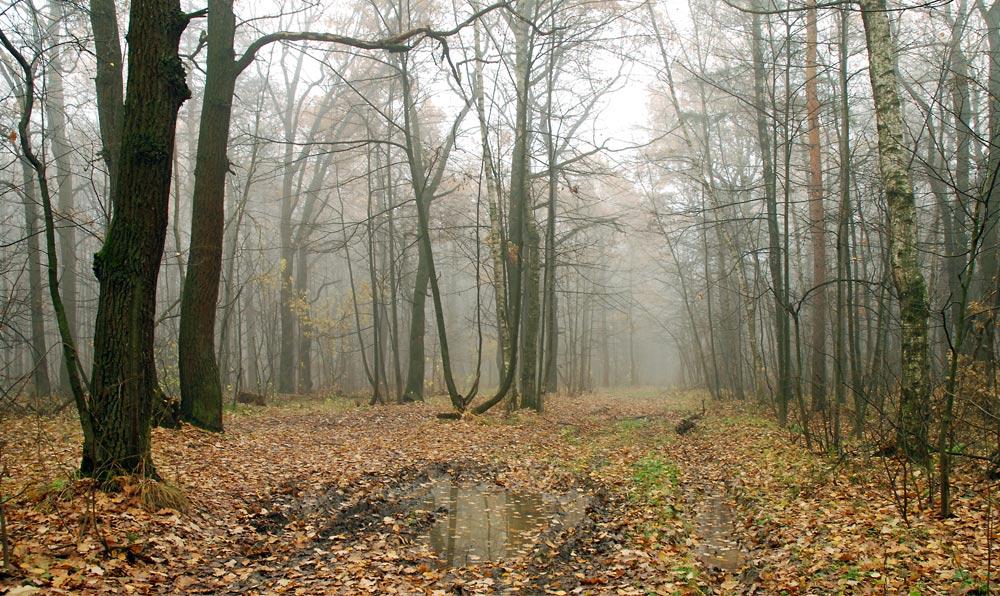 """фото """"В осеннем лесу."""" метки: пейзаж, лес, осень"""